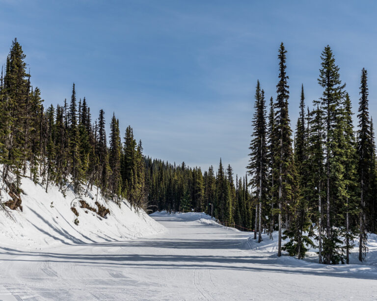 ski resort trail covered in snow and tall green trees revelstoke british columbia.